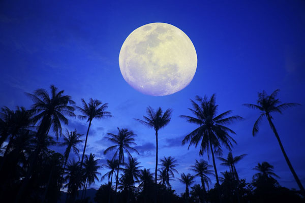 Full moon over palm trees