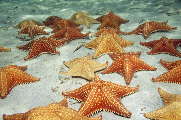Starfish on the sea floor