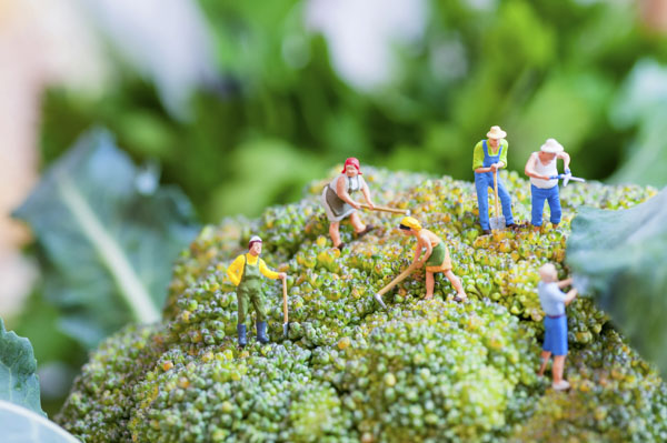 Tiny gardeners on broccoli