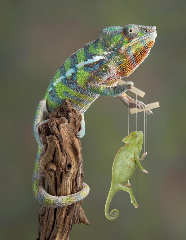 Chameleon marionette
