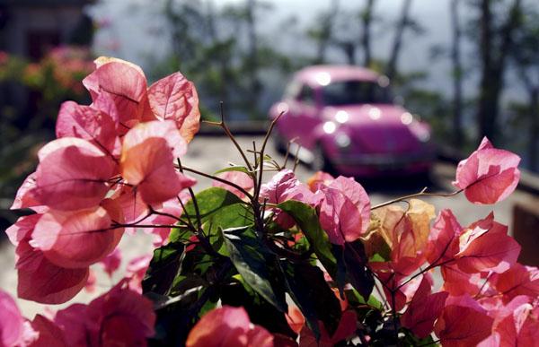 flowers in vw bug
