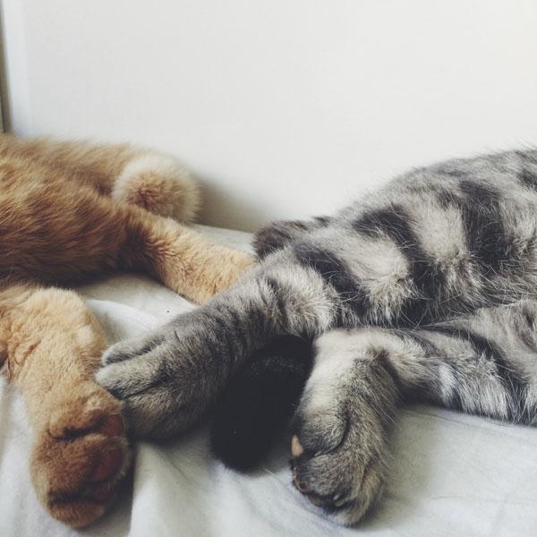 Kitties toe to toe