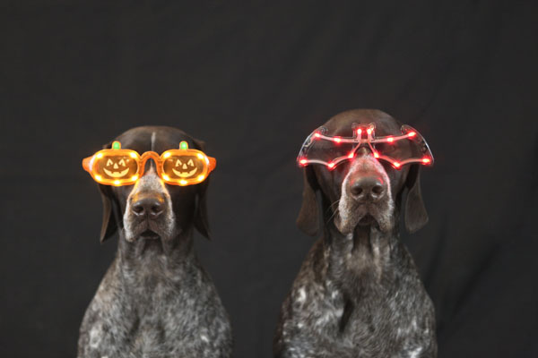The dynamic duo, dogs with Halloween glasses