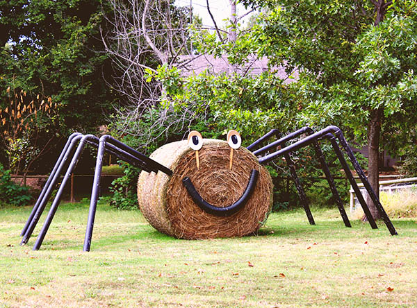 Spider and hay in park