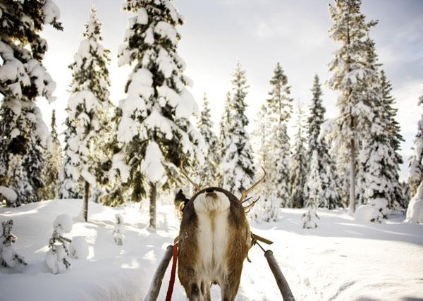 Reindeer Sleigh Ride