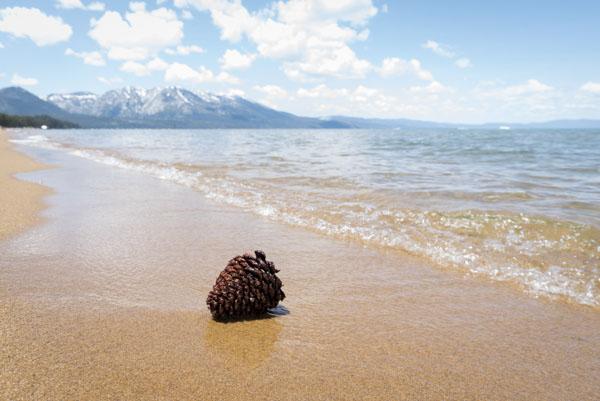 Pine cone on Lake Tahoe beach