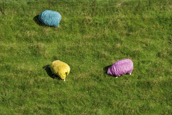 Three colorful sheep grazing in field