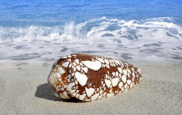 Shell with heart shaped markings on beach