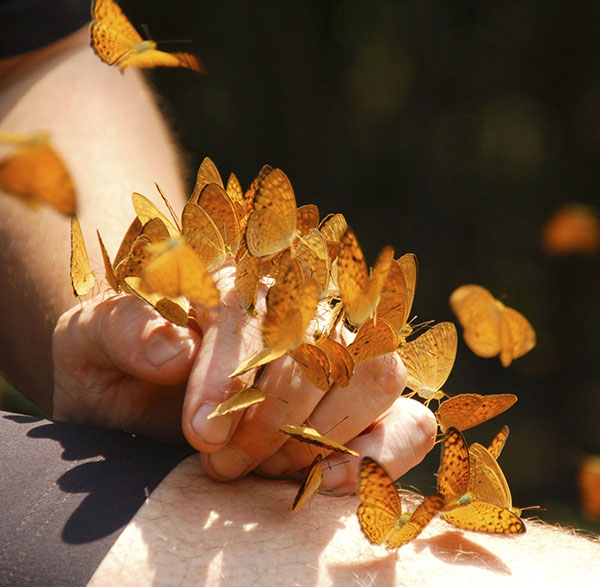 Butterflies landing on man's hand