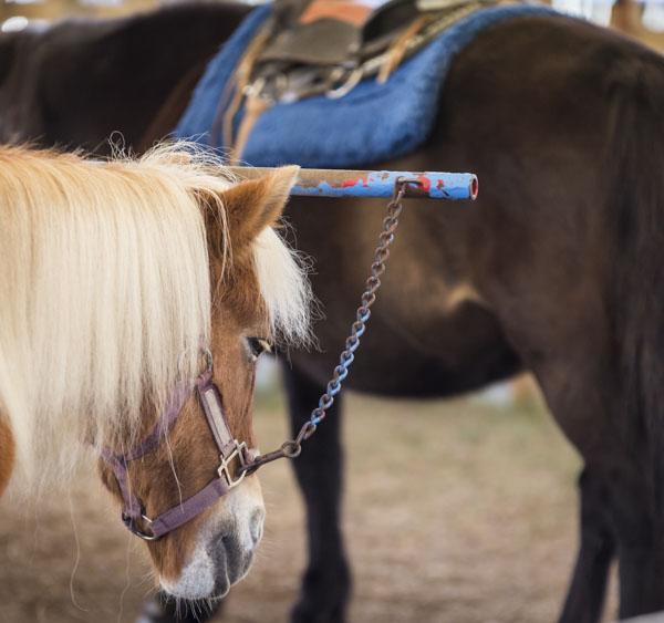 Children's horse ride