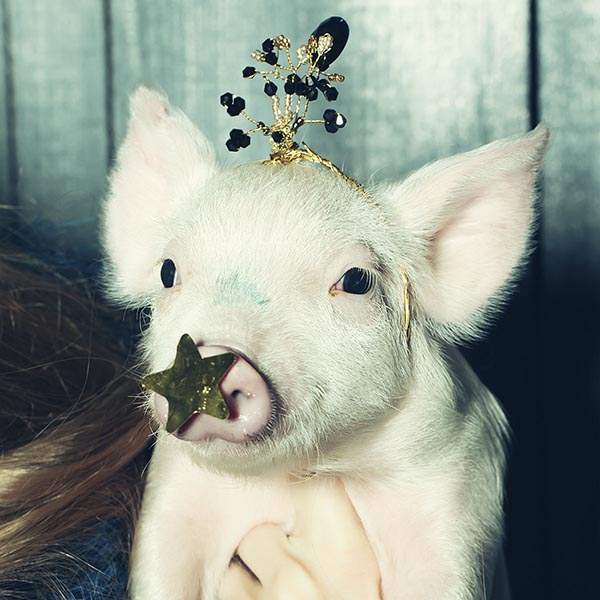 Little pig dressed as princess